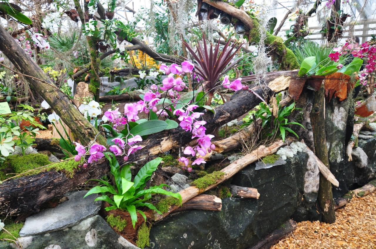 65079825 dsc 0265 - PREKMURJE z ogledom orhidej