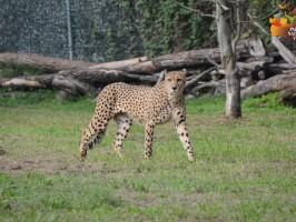 zoo safari verona 266x200 - Turistična ponudba