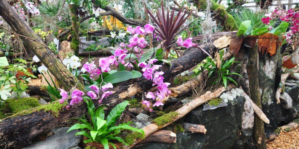 PREKMURJE z ogledom orhidej
